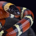 蛇という名前の意味は?蛇色はどんな色?