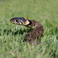 蛇 飼育 人間 なつく 人懐っこい