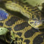 日本の庭で見かける蛇の種類は?