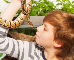 蛇 ペット 種類 値段 名前