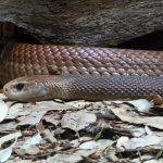 『有名なギリシャ神話の蛇、知られていない日本神話の蛇