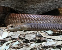 蛇 神話 日本 ギリシャ