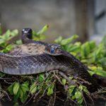 ペットの蛇が卵を産む場所は?数は?孵化はできる?