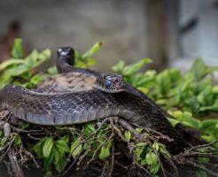 蛇 卵 孵化 産む 数 場所