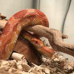 蛇をペットにしたいとき、ネズミ以外の餌はある?