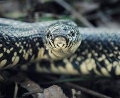 蛇 英語 読み方 種類 複数形