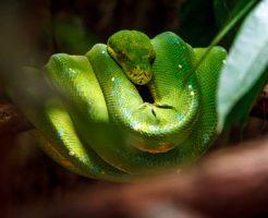 蛇 英語 意味 名言 スペル